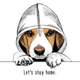 Wizerunek psa Beagle w kapturze.