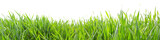 Grass in high definition isolated on a white background - 112964813