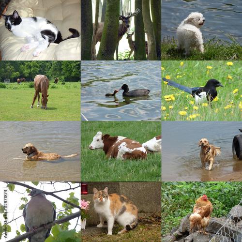 Fotobehang Vlinder Set of 12 animals photos