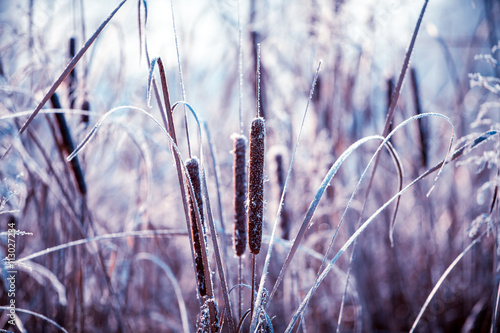 Plants covered with hoarfrost - 113027234