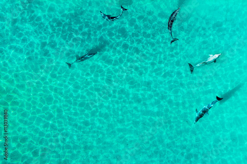 Aerial view of dophines in a tropical lagoon