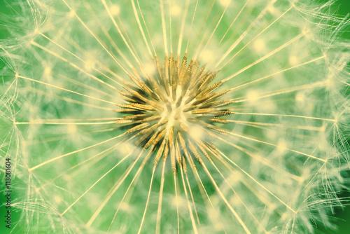 Naklejka Dandelion Interior Close Up