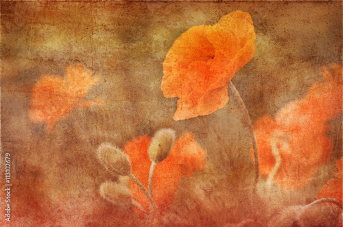 vintage poppies decoration, grunge background - 113102679