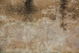 Gritty concrete wall, ideal for backgrounds and textures.