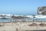 Group of penguins on the beach