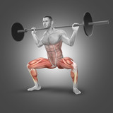 3D male figure in barbell plie squat pose