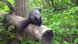 This video is about a squirrel
