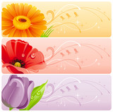 Summer flowers banner set with natural background. Gerbera daisy, red poppy, violet tulip for invitation design - wedding card, birthday, bridal shower, mothers day and more.