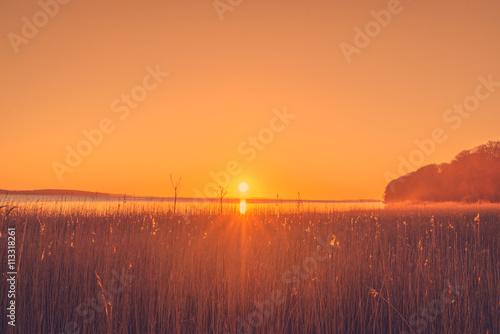 Poster Oranje eclat Reed in the sunrise