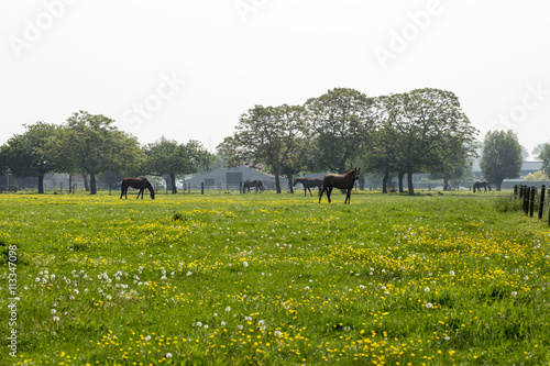 Horse Farm Poster