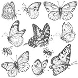 Hand drawn set of butterflies and bees. - 113376478