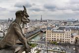 Fototapeta Paris - Krogulec © Bartłomiej Ryszka