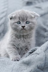 Little kitten on gray cloth © byrdyak