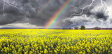 Thunderstorm on rapeseed field