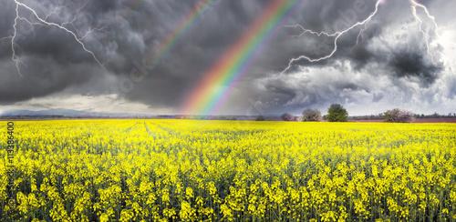 Papiers peints Jaune Thunderstorm on rapeseed field