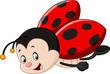 Cute ladybug cartoon   - 113414486