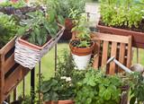 Balkongarten Urban gardening - 113422055