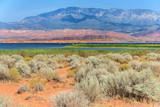 Desert vegetation in Sand Hollow State Park in  Utah