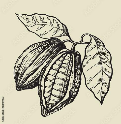 Zdjęcia na płótnie, fototapety, obrazy : black cacao beans