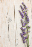 Fresh lavender flowers - 113468007