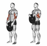 Reverse plate curls. Exercising for bodybuilding Target muscles are marked in red. 3D illustration
