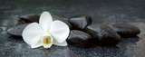 Fototapety White orchid and black stones close up.