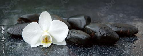 biala-orchidea-i-czarni-kamienie-zamykaja-up