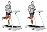 Run. Exercising for bodybuilding Target muscles are marked in red. 3D illustration