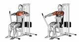 Seated chests press. Exercising for bodybuilding Target muscles are marked in red. 3D illustration