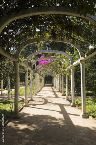 Poster Beautiful Infinite Arched Pergola Path in Botanical Garden, Rio de Janeiro, Braz