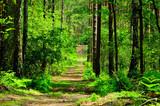 Droga prowadzi przez zielony las