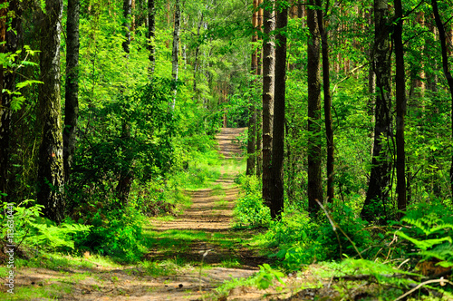 obraz PCV Droga prowadzi przez zielony las