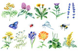Collection of hand drawn medical herbs and plants.