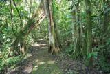 Dżungla / Natura / Krajobraz