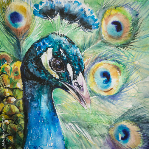 Portrait of peacock.Picture created with watercolors. - 113640256