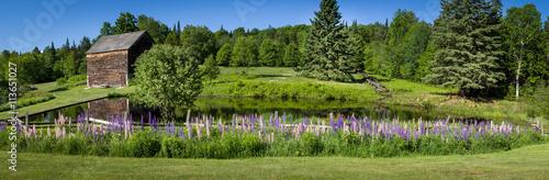 Zdjęcia na płótnie, fototapety, obrazy : Panoramic image of a lupine garden in the Adirondacks