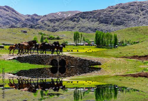 Zdjęcia na płótnie, fototapety, obrazy : dört nala dağlarda koşan atlar