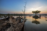 The beautiful dead tree in lake at twilight time