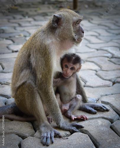 Foto op Canvas Aap mamma e figlio