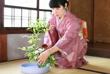 華道/生け花をする着物姿の女性