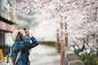A traveler Sightseeing in Japan Cherry blossom