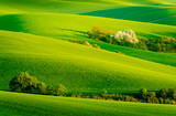 Green wavy hills in South Moravia - 113769403