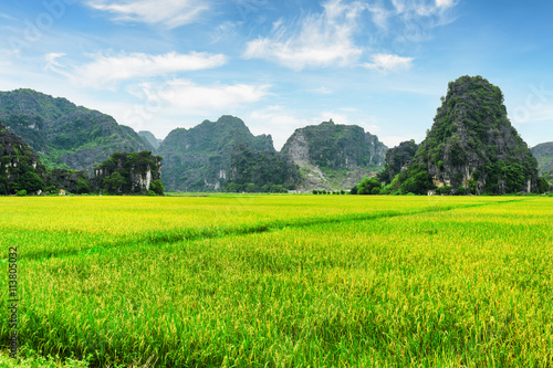 Beautiful view of bright green rice fields among karst mountains