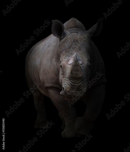 white rhinoceros in dark background - 113805440