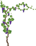 Floral frame with grapevine, grape clusters on a vine tree. Graphic element with copy space for text.