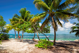 Palm trees on Key West beach - 113839669