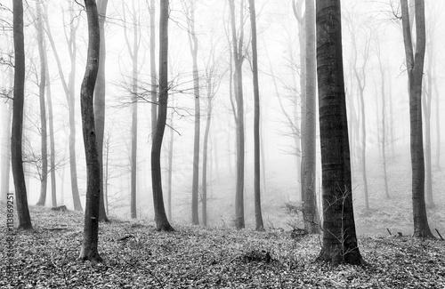 Fototapeta Forest mist in BW