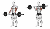 Curl with a barbell grip on top. Exercising for bodybuilding Target muscles are marked in red. Initial and final steps. 3D illustration