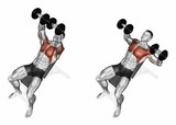 Dumbbell bench press while lying on an incline bench. Exercising for bodybuilding. Target muscles are marked in red. Initial and final steps. 3D illustration - 113881876