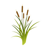 Vector Cattails Illustration - 113889220